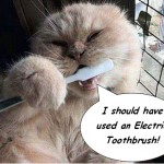 use electric toothbrush